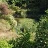 Poggio Ventoso - Der Teich hinter dem Gästehaus