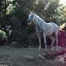 Poggio Ventoso - Pferde im 'Parco Cavallino' - Foto © Maibritt Olsen