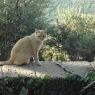 Katze auf dem 'Poggio Ventoso' - Foto © Maibritt Olsen