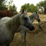 Pferde auf dem 'Poggio Ventoso' - Foto © Maibritt Olsen