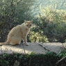 Katze auf Poggio Ventoso - Foto © Maibritt Olsen