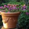 Blumenschmuck auf Poggio Ventoso - Foto © Maibritt Olsen